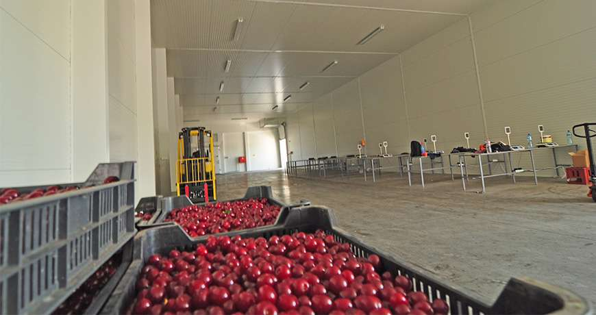 Estrutura Metálica Armazenamento de Produtos Hortícolas Caixas Frutas Interior Frisomat