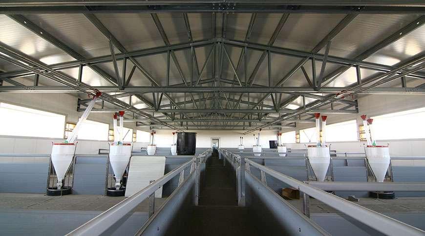 Pavilhão Industrial em Aço Exploração de Suínos Frisomat