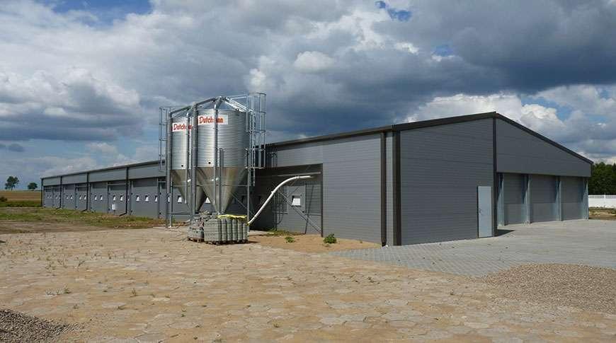 Aviário Metálico Industrial em Aço Exploração Avícola Frisomat