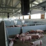 Building for pig farms