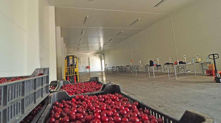 Pavilhão Armazenamento de Frutas Frisomat