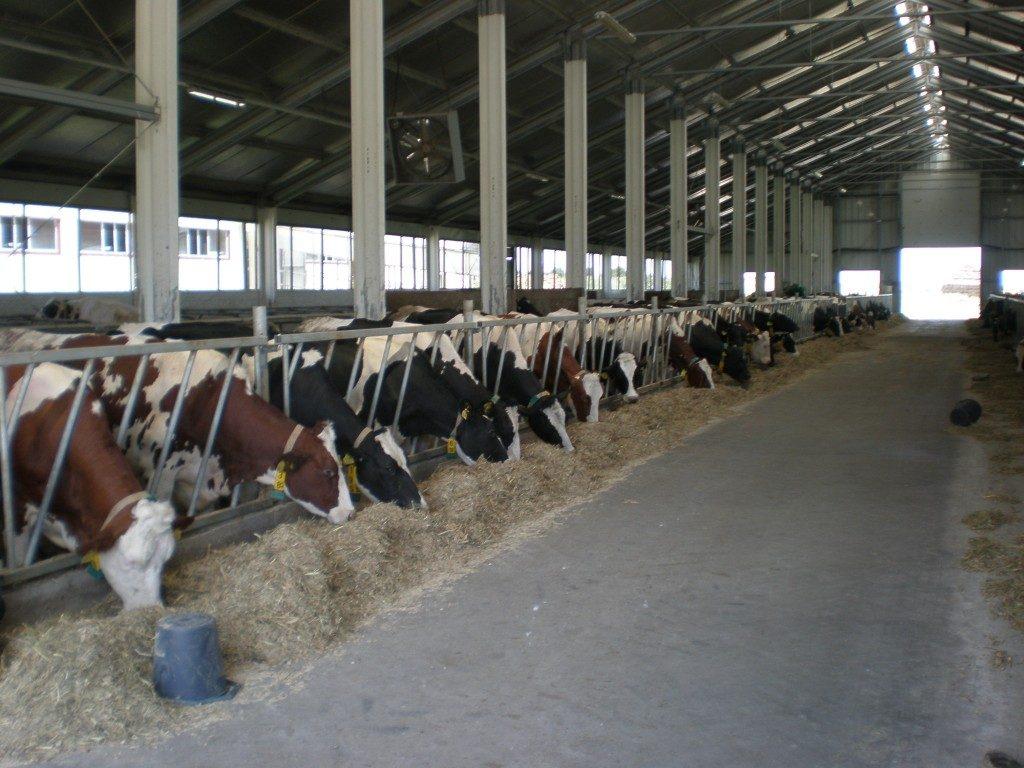 quintas de gado
