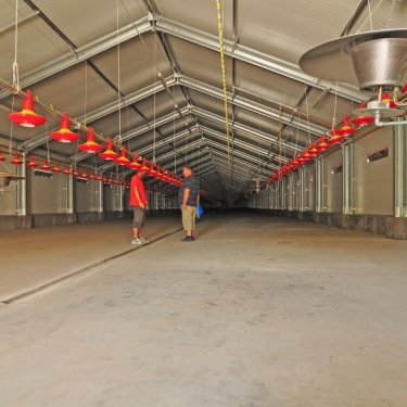 chicken farm broiler